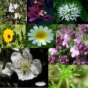Autism: Flower remedies, Seed and Rock Essence Combination